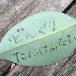 赤塚公園どんぐりたんけんたい